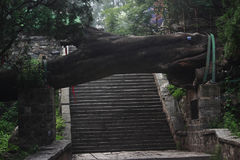 Dalende boom boven trap in park van Taishan Stock Fotografie