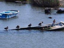 Dalende boot Stock Afbeeldingen