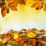 Dalende de bladerenachtergrond van de herfst Royalty-vrije Stock Fotografie