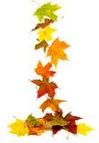 Dalende de herfstbladeren Royalty-vrije Stock Foto's