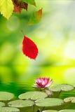 Dalende de herfstbladeren en een lotusbloembloem op het water Stock Foto's