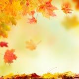 Dalende de herfstbladeren met vrije ruimte voor tekst Stock Foto