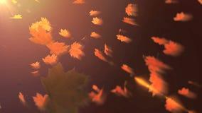 Dalende esdoornbladeren op de zonlichtachtergrond stock footage