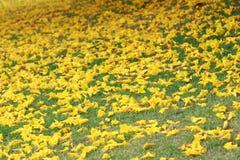 Dalende gele bloemen Royalty-vrije Stock Afbeeldingen