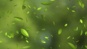 Dalende groene bladeren stock footage