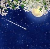 Dalende meteoor Bloeiende kers Volle maan Nachtcharme De lente Stock Afbeeldingen