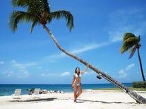 Dalende Palm Royalty-vrije Stock Foto
