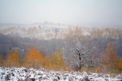 Dalende sneeuw stock afbeelding