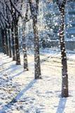 Dalende sneeuw stock fotografie
