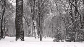 Dalende sneeuw in een de winterpark in langzame motie stock videobeelden