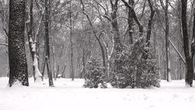 Dalende sneeuw in een de winterpark in langzame motie stock video