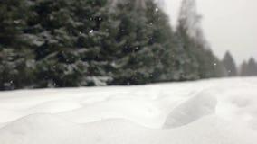 Dalende sneeuw in een de winterpark met sneeuw behandelde bomen stock footage