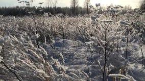Dalende sneeuw op gebied stock footage