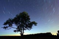 Dalende sterren van de nacht de eenzame boom Stock Afbeeldingen