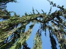 Dalende takken van een boom royalty-vrije stock foto's