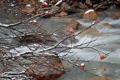 Dalende water en lijsterbes stock foto