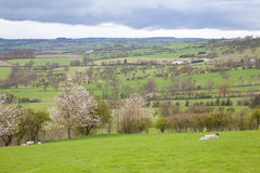 Dales Landscape Royalty Free Stock Photo
