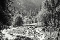 Dalgolv av den Yosemite nationalparken Fotografering för Bildbyråer