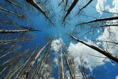 Dali Haiyan Park  Yunnan. Yunnan Dali Xizhou Sky Park Tree Stock Photo
