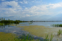 Dali Lake. Dali has a lake with very pure water. The residents call it a sea. At the lakefront, there are some plants like lotus and some grass.The sky is blue royalty free stock photos