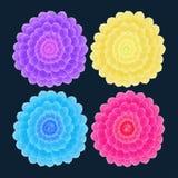 Dalia kwiat na zmroku również zwrócić corel ilustracji wektora Zdjęcia Royalty Free