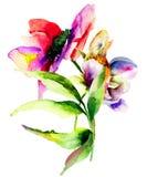Dalia kwiaty Obrazy Stock