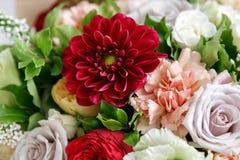 Dalias rojas Ramo hermoso hecho de diversas flores en fondo gris flor colorida de la mezcla del color Primer Imágenes de archivo libres de regalías