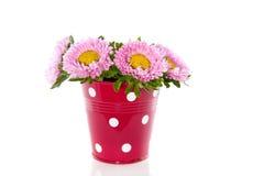 dalii kwiatów menchie Zdjęcia Royalty Free
