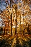 Daling/de Herfst in het hout Stock Afbeeldingen