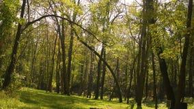 Daling Forest Series - een opheldering in het hout in de vroege herfst stock videobeelden