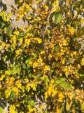 Daling, gele bladeren op de muur, de herfststilleven stock afbeelding