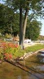 Daling het draaien bladeren door het meer Stock Foto's