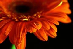 Daling op bloem Stock Foto's