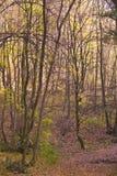 Daling van bos Stock Foto's
