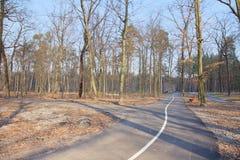 Daling van bos - parkeer weg in Bucha, de Oekraïne Royalty-vrije Stock Afbeeldingen