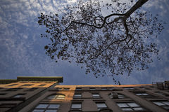 Daling van Central Park, New York Royalty-vrije Stock Afbeelding