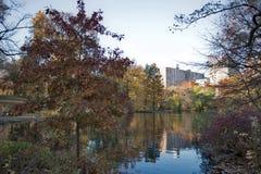 Daling van Central Park, New York Stock Foto