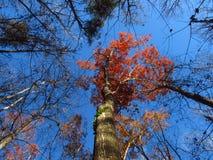 Daling van het bos Stock Foto's
