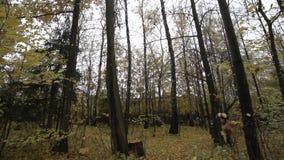 Daling van het gebied van Moskou langzaam motieeind van Oktober stock videobeelden