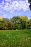 Daling van het park met groene bomen onder blauwe hemel Stock Foto's
