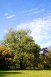 Daling van het park met groene bomen onder blauwe hemel Royalty-vrije Stock Afbeeldingen