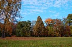 Daling van het park met groene bomen onder blauwe hemel Royalty-vrije Stock Foto