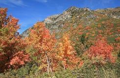 Daling van het Uinta Nationale Bos, Utah Stock Foto