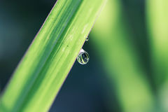 Daling van water Royalty-vrije Stock Fotografie