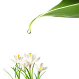 Daling van water en bloemen Stock Afbeeldingen