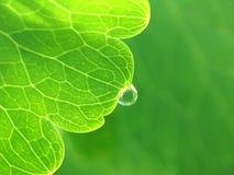 Daling van water op een groen blad Royalty-vrije Stock Afbeeldingen