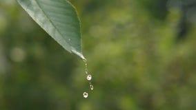 Daling van water op een groen blad stock videobeelden