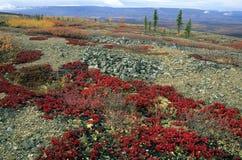 Daling van Yukon royalty-vrije stock fotografie