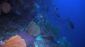Daling weg op een koraalrif stock videobeelden