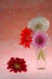 Dalingen en bloemen Stock Afbeelding